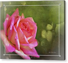 Pink Rose Dream Digital Art 3 Acrylic Print