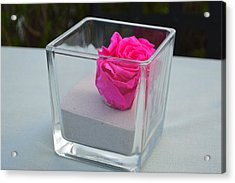 Pink Rose In Venice Acrylic Print