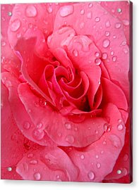 Acrylic Print featuring the photograph Pink Rose by Patricia Januszkiewicz