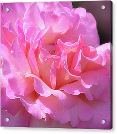 Acrylic Print featuring the photograph Pink Rose Ruffles by Julie Palencia