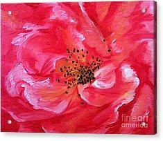 Pink Rose Acrylic Print by Sheron Petrie