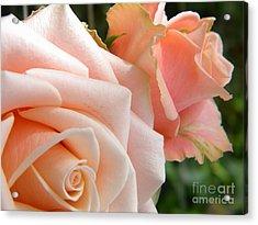 Pink Roses Acrylic Print by Amanda Heavlow