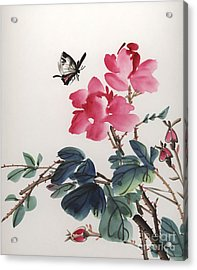 Pink Roses And Butterfly Acrylic Print