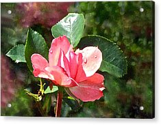 Pink Roses In The Rain 2 Acrylic Print