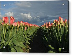 Pink Row Tulips Acrylic Print by Brent Easley