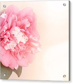 Acrylic Print featuring the photograph Pink Ruffled Camellia by Cindy Garber Iverson