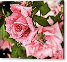 Pink Serenity Acrylic Print