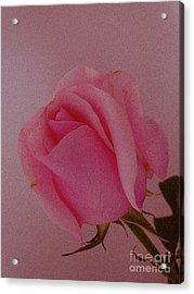 Pink Single Rose Acrylic Print