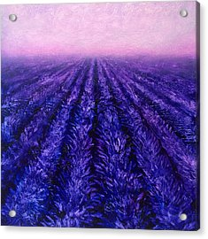 Pink Skies - Lavender Fields Acrylic Print by Karen Whitworth