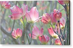 Pink Splendor Acrylic Print by Charlotte Gray