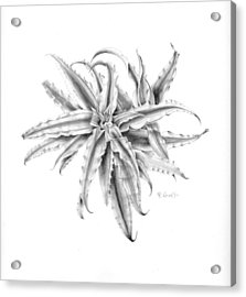 Pink Star In Gray Acrylic Print