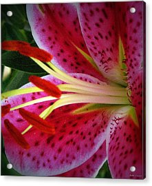Pink Tiger Lilly Acrylic Print