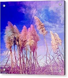 Pink Toi Toi Grasses Acrylic Print