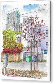 Pink Tree In Roxbury Park, Beverly Hills, California Acrylic Print by Carlos G Groppa