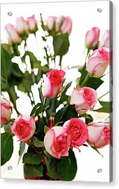 Pink Trimmed Roses Acrylic Print by Marilyn Hunt