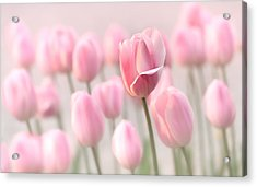 Pink Tulip Cloud Acrylic Print by Mary Jo Allen