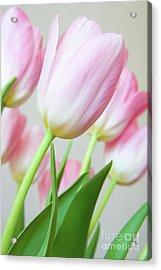 Pink Tulip Flowers Acrylic Print by Julia Hiebaum