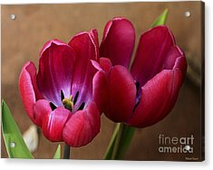 Pink Tulip Pair Acrylic Print by Deborah Benoit