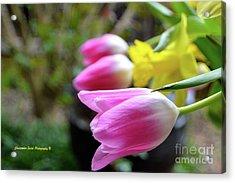 Pink Tulips Row Acrylic Print