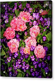 Pink Tulips With Purple Flowers Acrylic Print by James Steele