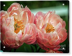 Acrylic Print featuring the photograph Pink Twins by Craig Leaper