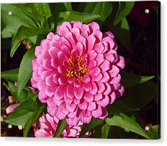 Pink Velvet Acrylic Print by James Granberry