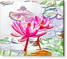 Pink Water Lily Flowers Blooming On Pond Acrylic Print by Lanjee Chee