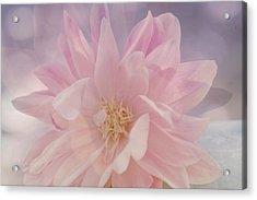 Pink Whisper Acrylic Print by Bonnie Bruno