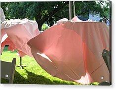 Pink Wispers Acrylic Print