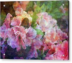 Pink With White Frills 1503 Idp_3 Acrylic Print