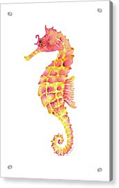 Pink Yellow Seahorse Acrylic Print by Amy Kirkpatrick