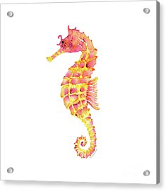 Pink Yellow Seahorse - Square Acrylic Print by Amy Kirkpatrick