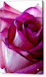 Pinked Rose Details Acrylic Print by Bill Tiepelman