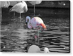 Pinky Acrylic Print