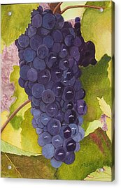 Pinot Noir Ready For Harvest Acrylic Print