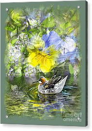 Pintail Pond Acrylic Print by Chuck Brittenham