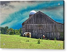 Pinto Summer Acrylic Print by Jan Amiss Photography