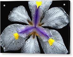 Pinwheel Lace Acrylic Print by Lyle  Huisken