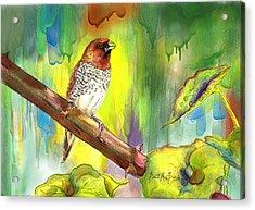 Pinzon Canella Acrylic Print
