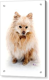 Acrylic Print featuring the pastel Pip by Brent Ander