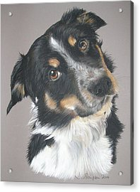 Pip Acrylic Print by Joanne Simpson