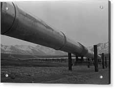 Pipeline Near Atigun Pass Brooks Acrylic Print by Everett