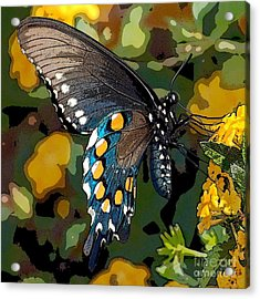 Pipevine Swallowtail Butterfly Acrylic Print by David Smith