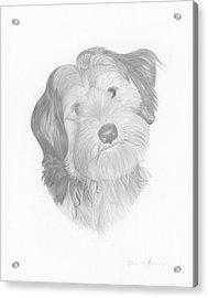 Pippin Acrylic Print