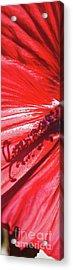 Pistil Shadow Acrylic Print