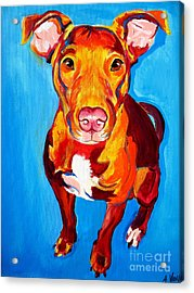 Pit Bull - Chino Acrylic Print by Alicia VanNoy Call