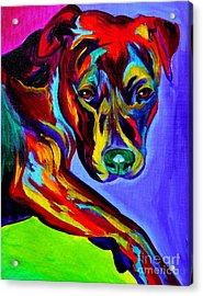 Pit Bull - Gaze Acrylic Print by Alicia VanNoy Call