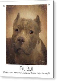 Pit Bull Poster Acrylic Print by Tim Wemple