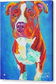 Pit Bull - Puppy Dog Eyes Acrylic Print by Alicia VanNoy Call