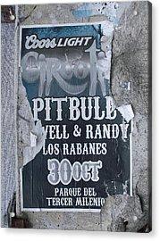 Pitbull Acrylic Print by Anna Villarreal Garbis